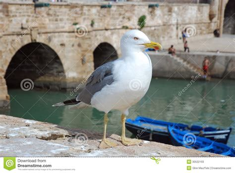 the open boat seagull seagull in a harbor with background blue boats stock