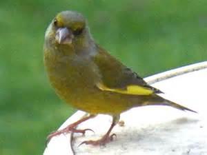 du four au jardin et mes dix doigts l oiseau vert