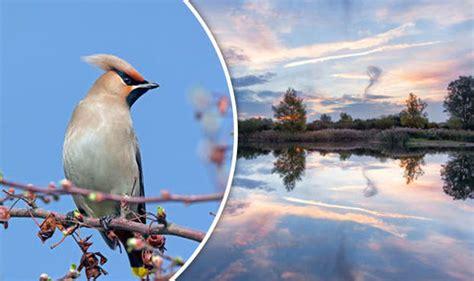 Rspb Big Garden Birdwatch Start Twitching by Birdwatchers Are Urged To Create Snapshot Of Feathered