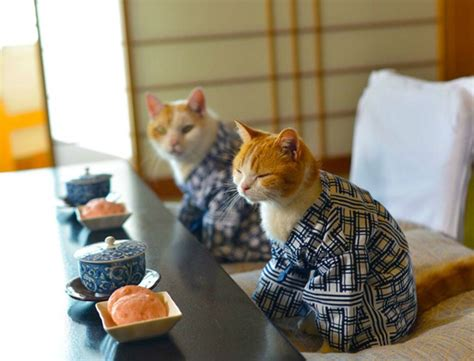 cat wallpaper nippon these cats can be my japanese tour guides any time catster
