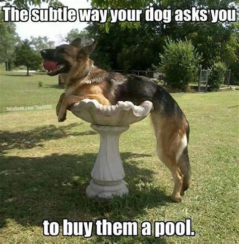 Funny German Shepherd Memes - funny animal pictures of the day 23 pics