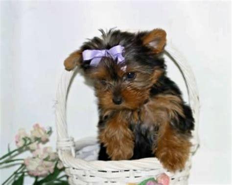 free puppies in alabama pets jasper al free classified ads
