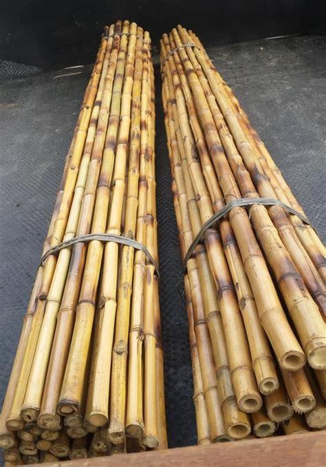 Jual Bibit Bambu Cendani jual bambu cendani lurus harga murah bantul oleh cv