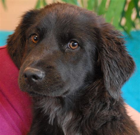 spca dogs spca puppies for adoption breeds picture