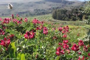 fiori di fiori di primavera in sicilia aprile ablogaboutsicily