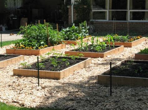 backyard farming blog your garden the most local food of all backyard