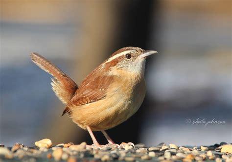 aiken birds home