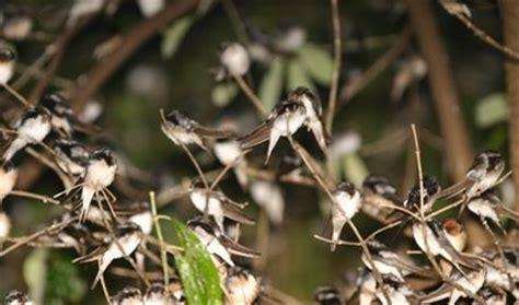 bird ecology study group nature society singapore do