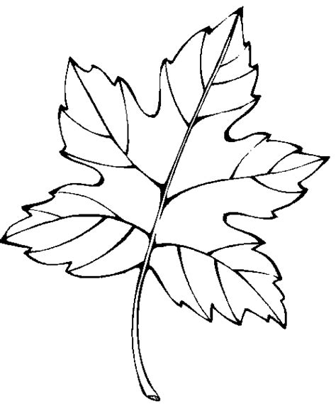 Leaf Coloring Pages Coloringpages1001 Com Coloring Page Leaves