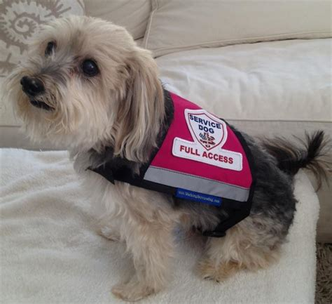 service vest for dogs service gear premium xx small and x small service vest