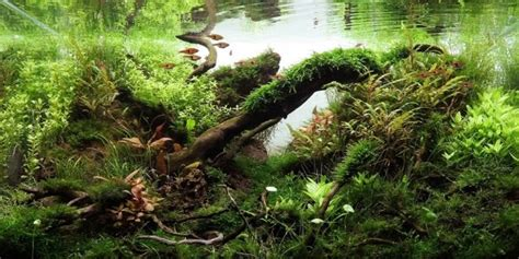 aquascape forest style understanding jungle aquascaping style the aquarium guide