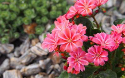 fiori ricanti resistenti al freddo piante resistenti al freddo le 5 piante pi 249 forti in