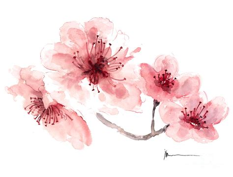 Simple Cad Online by Watercolor Jazmine Cherry Blossom Fragrance Watercolor