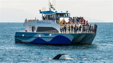 los angeles boat tours whale watching in long beach los angeles harbor breeze