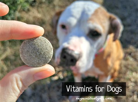 vitamins for dogs vitamins for dogs nuvet review pawsitively pets