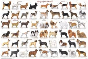 every thing about dogs general information