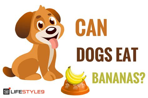 can eat banana can dogs eat bananas