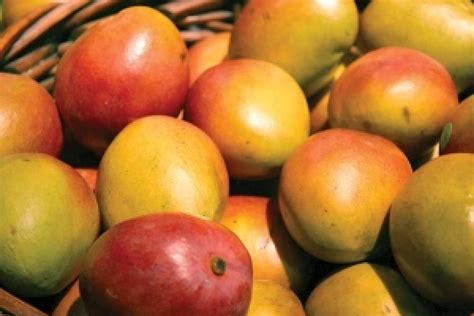 gets me mangoes books much ado about mango nugget markets daily dish