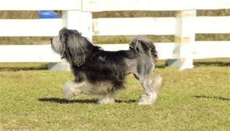 aggressive breeds list for apartments aggressive breeds list for apartments breed dogs spinningpetsyarn