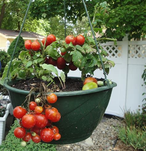 13 Pictures To Start Vegetable Gardening In Planters Garden Vegetable Planters