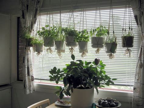 Hanging Herbs In Kitchen Window by Hanging Herb Gardens You Will To Display In Your Home