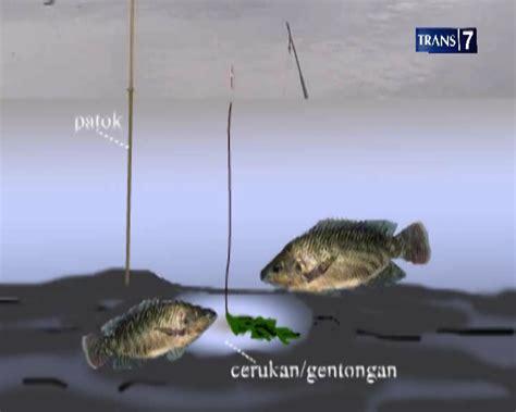 Joran Pancing Ikan Nila Mancing Nila Di Ngantang Nd Fishing Community