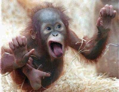 crazy  monkey funny animal pictures tedlillyfanclub