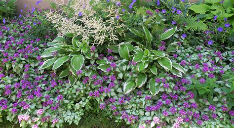 Gardening Zones Usa - how to create a colorful long lasting shade garden american meadows blog
