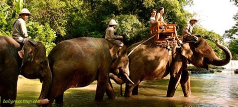 bali elephant ride tour bali zoo elephant ride tour bali elephant safari ride