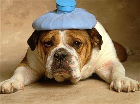 mal di testa sempre il ritorno porta addosso mal di testa e mal d anima