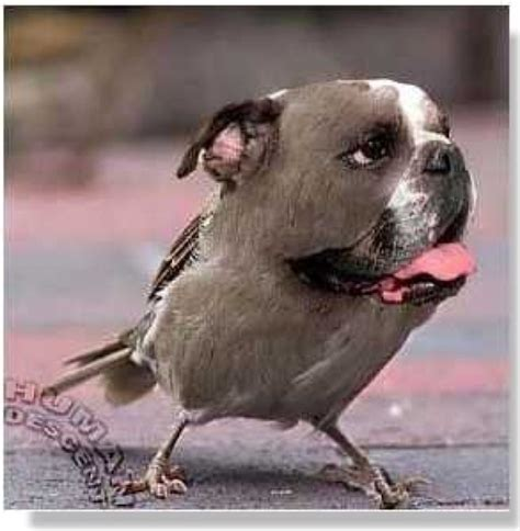 bird dogs what you ve never seen a bird so it s disgusting pint