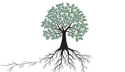 Branching Out by Debt Capital Markets Emea Finance