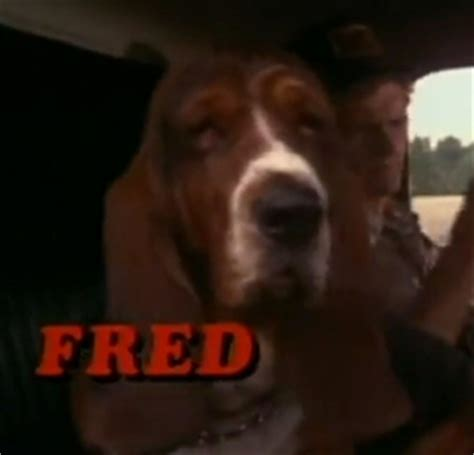 dogs name in smokey and the bandit name this winner gets a page 5 tigerdroppings