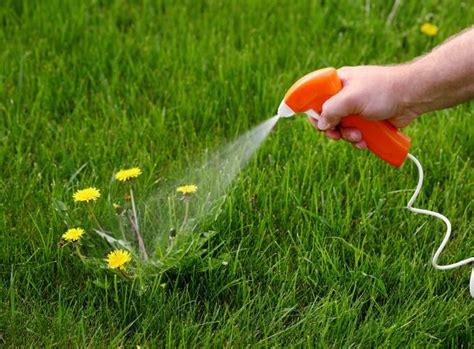 was hilft gegen ameisen im rasen 3412 unkraut bek 228 mpfen und verhindern unkraut garten