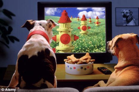 puppy tv show dogs are becoming addicted to digital tv 4 legged friends with square daily