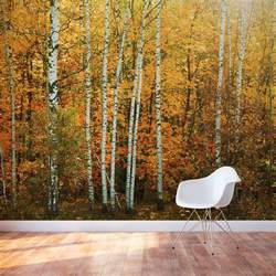 wall mural forest autumn birch tree forest wall mural