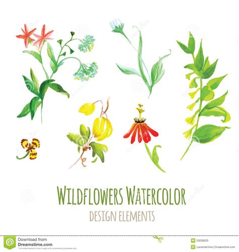 Design Elements Watercolor | wildflowers watercolor design elements set stock vector
