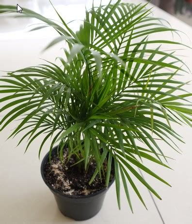 indoor plant images with names 10 large and small indoor plants the self sufficient living