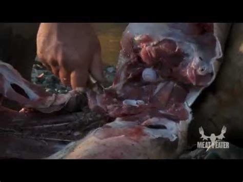 steven rinella knife steven rinella meateater butchering a boar with the