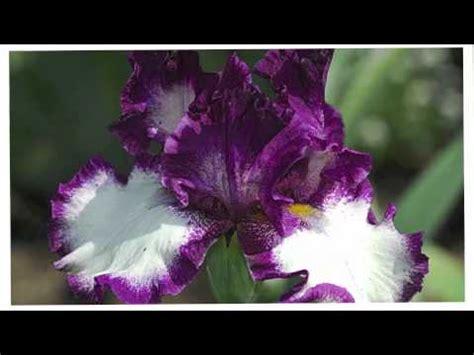 il valzer dei fiori valzer dei fiori di tchaikovsky