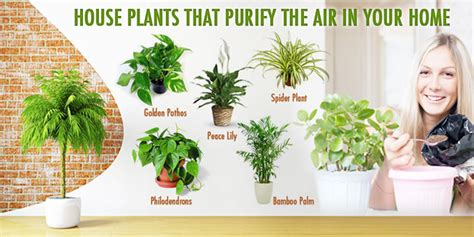 indoor plants to clean air 12 houseplants that clean the air and are almost