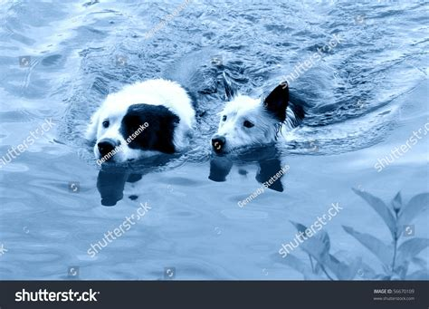 can dogs get mono swimming dogs mono color stock photo 56670109