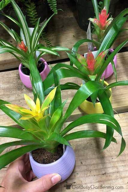 unique house plants best 25 tropical house plants ideas on pinterest palm
