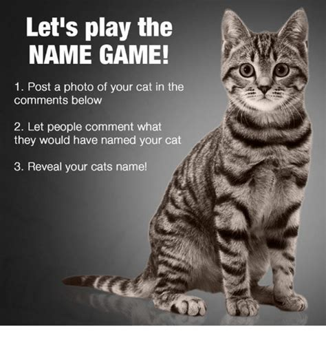 Cat 1 Named by Let S Play The Name 1 Post A Photo Of Your Cat In