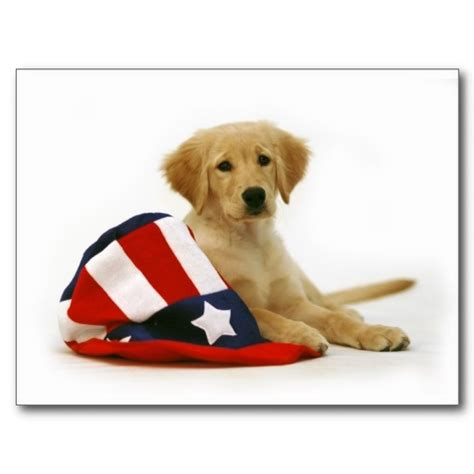 patriotic golden retriever 17 best images about golden retrievers on independence day greetings cars