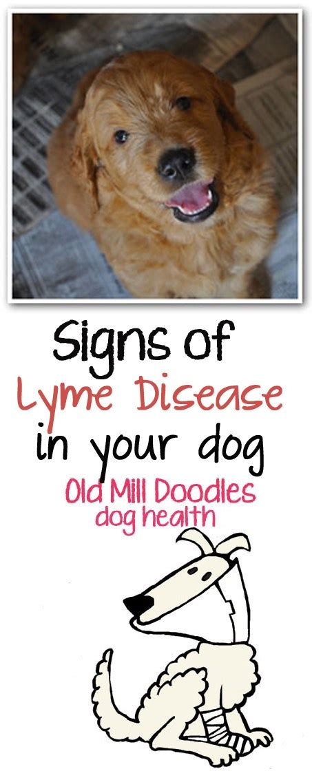 signs of lyme disease in dogs tick lyme disease symptoms search results dunia photo