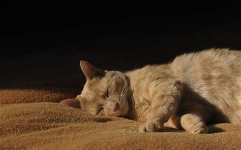 Decke Katze by Katze Kater Decke