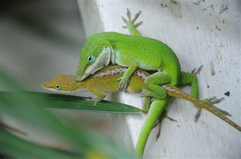 animales vertebrados donde viven como nacen animales vertebrados donde viven como nacen