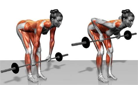 exercise for latissimus dorsi bent barbell row guide
