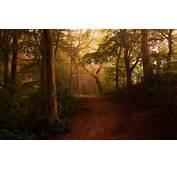 Landscape Nature Mist Forest Shrubs Path Leaves